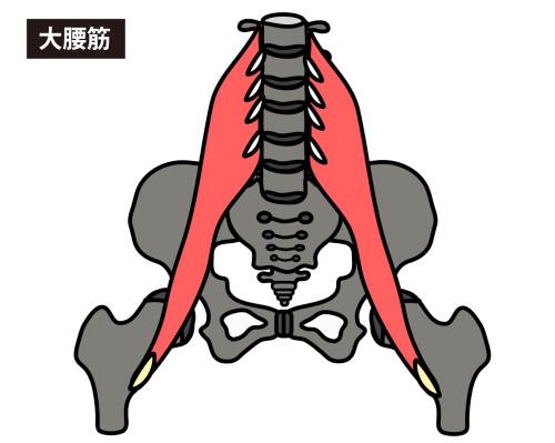 「大腰筋」の画像検索結果